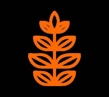 เครื่องคั้นน้ำส้มอัตโนมัติ ZUMMO ไม่ต้องปอกเปลือก ขายน้ำส้มสดให้คุ้มค่า ที่ร้านออแกนิค